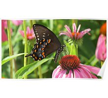 Back yard Butterfly Poster