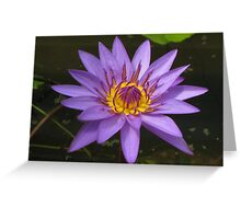 Water lily, Kenilworth Aquatic Gardens Greeting Card