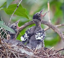 Hungry Babies by Eivor Kuchta
