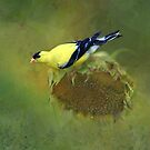 Goldfinch #1 by Eileen McVey