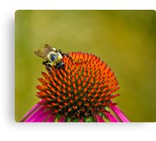 Lunch on the Cone Canvas Print