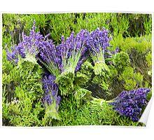 Harvested Lavender Poster