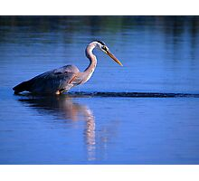 Great Blue Heron 1 Photographic Print