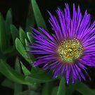 Purple Glow by Heather Friedman
