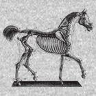 Horse Anatomy Vintage by Vana Shipton