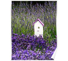 Lavender Birdhouse 2 Poster