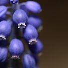 Bitty Blue Bells by Lisa Knechtel