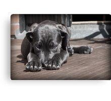Shy Black Dog Canvas Print