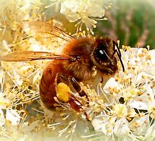Honeybee with pollen by ©The Creative  Minds