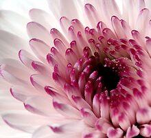 Inner Beauty by LeJour