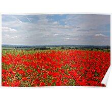 Poppy vista Poster