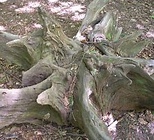 Old Tree Stump by lezvee