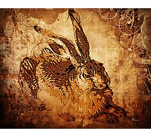 MR BUNNY SAFE IN HIS BURROW Photographic Print