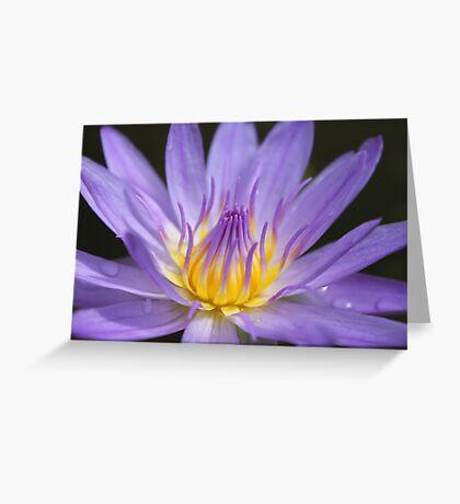 Water lily, Kenilworth Aquatic Gardens Greeting Card