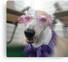 Canine Diva Metal Print