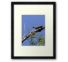 wild dove Framed Print