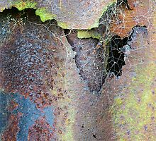 Web & Decay by MikeBarber