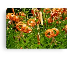 Turk's Cap Lilies - Lilium superbum L. - Nodding Beauties Canvas Print