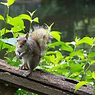 Squirrel by Ellesscee