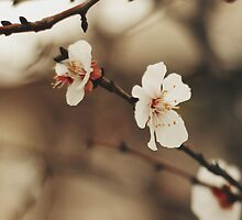 Spring Vibes by Tayaphoto