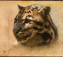 Clouded Leopard by Dave Godden