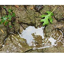 Stepping Stone Pool Photographic Print
