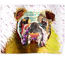 English Bulldog  Poster