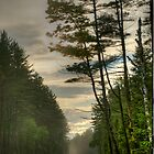 The Road Less Traveled by Peggy  Woods Ryan