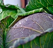 Farmer's Market Cabbage by jbarnesphotos