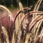 Red Fountain Grass by Carol Bailey White
