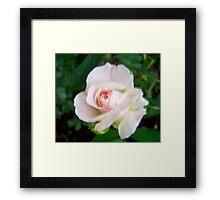 Governor Generals Roses #24 Framed Print