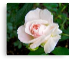 Governor Generals Roses #24 Canvas Print