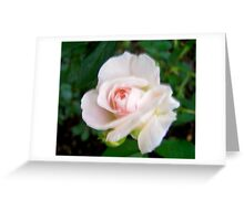 Governor Generals Roses #24 Greeting Card