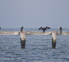 Shags Unwinding by Larry Lingard-Davis