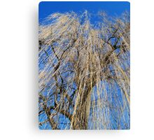 Mourning Willow Canvas Print