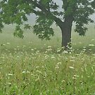tree in the meadow by dc witmer