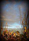 Cacti at Sunset by Kimberly Chadwick