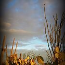 Cacti at Sunset by Kimberly Chadwick