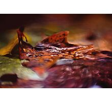 Autumn Rain Photographic Print
