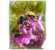 Wild Bumblebee  Poster