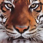 Tiger Portrait by michael montgomerie