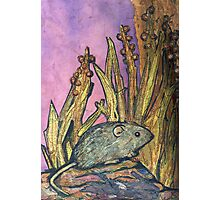 Native Mouse Photographic Print