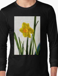Daffodil HQ Long Sleeve T-Shirt