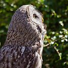 Great Grey Owl by Margaret S Sweeny