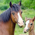 Mare & Foal by Margaret S Sweeny