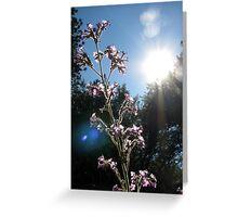 Sunlight Feeds the Flower Greeting Card