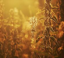 Summer Sunset #1 by Laura Hetherington