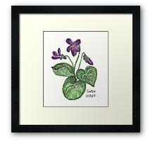 sweet violet Framed Print
