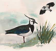 Lapwings by Sam Burchell