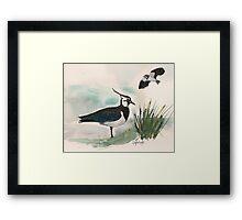 Lapwings Framed Print